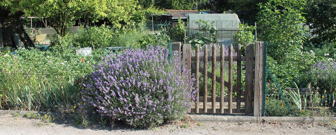Jardins familiaux ville de hoenheim for Jardin familiaux